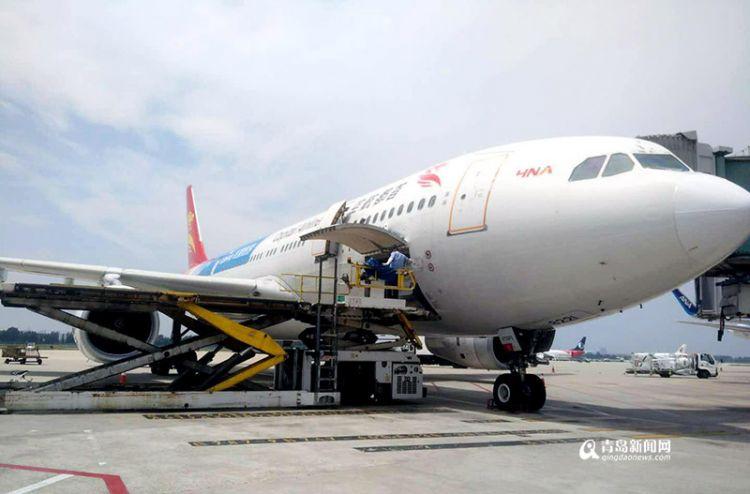 新鲜直运 青岛机场空港水果口岸迎首批加拿大车厘子
