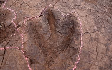 """山东郯城发现恐龙足迹化石群  """"侏罗纪世界""""再现"""