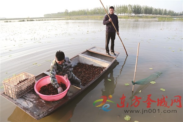 """济宁:不毛地成了""""聚宝盆"""""""