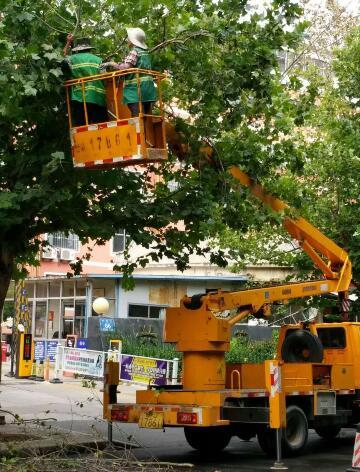 泰安文化路两侧树有枯枝 存在安全隐患