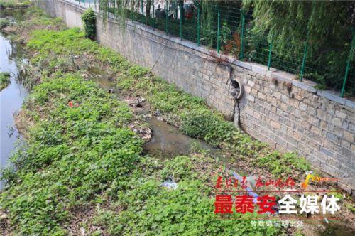 泰安七里河老王府河段河水臭味难闻 市民盼治理