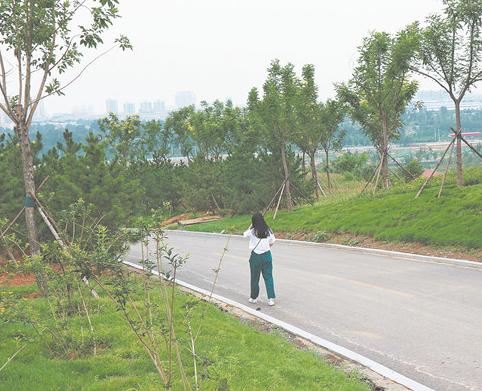 临淄一废旧矿坑变身郊野公园 修复前该区域都是裸岩