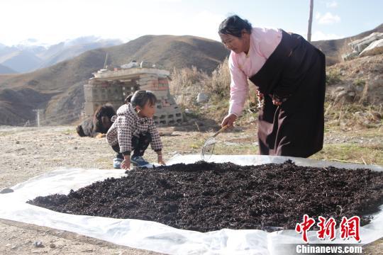 公益扶贫项目助青海玉树藏族妇女实现脱贫赋能