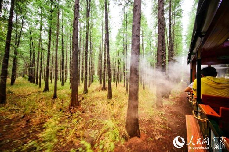 探访淮安金湖水上森林公园:汽笛声中穿林而过