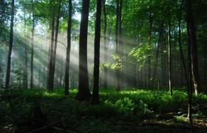 淄博两个镇获评山东省森林小镇 分别是……
