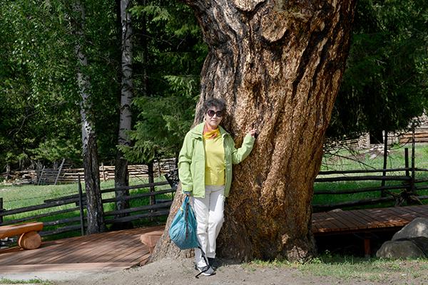 25  白哈巴村里的百年老树