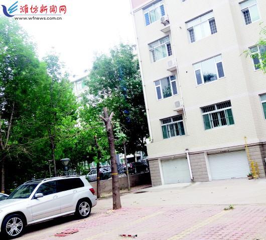 """居民楼前多棵树木遭""""砍头"""" 事发潍坊金融小区"""