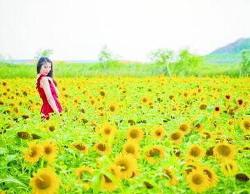 加强生态环境保护 建设美丽潍坊
