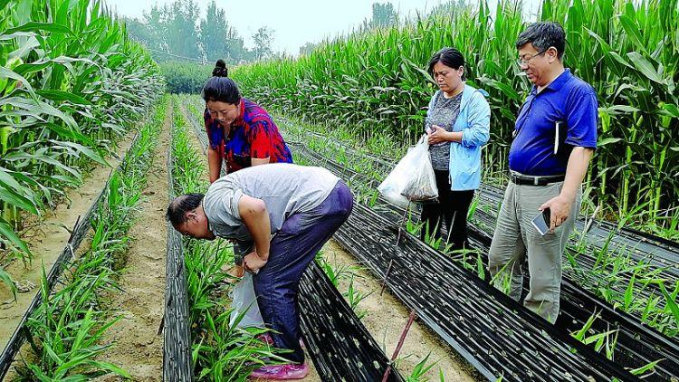 省农科院专家来莱芜市考察生姜产业发展情况