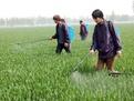 淄博首张农药经营许可证在张店颁发 未取得许可证将被依法查处