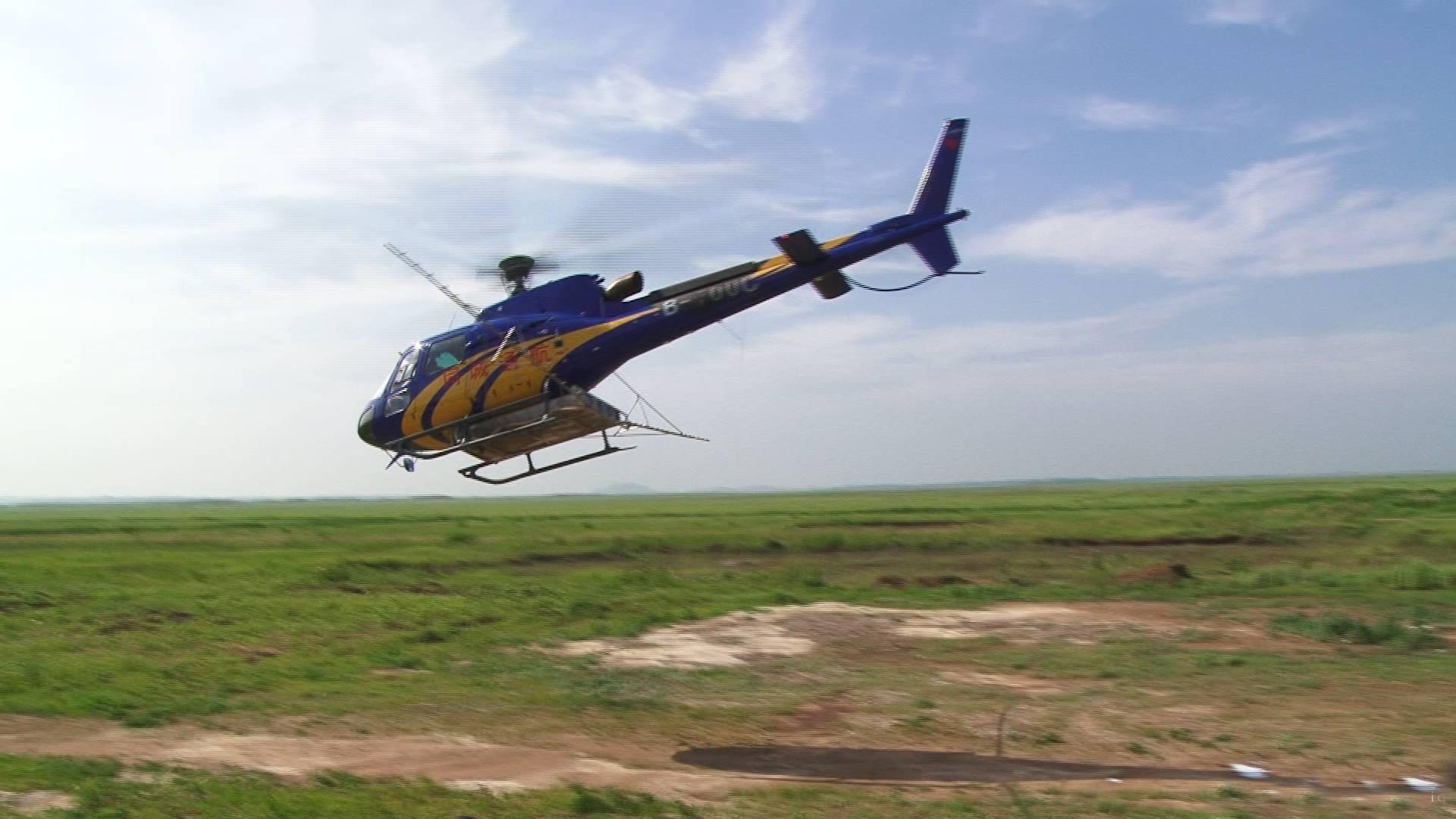 潍坊峡山的蚂蚱不一般,都动用直升机了