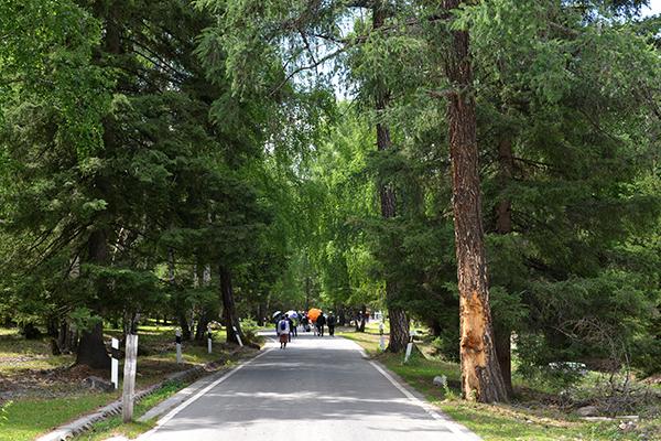 1  通往白哈巴村的公路