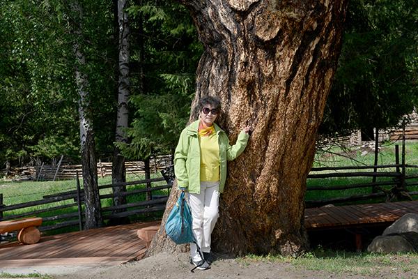 8  白哈巴村里的百年老树