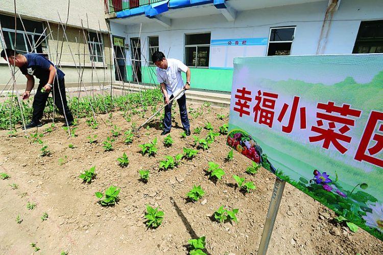 """钢城高新区大上峪村""""幸福食堂""""有了小菜园"""