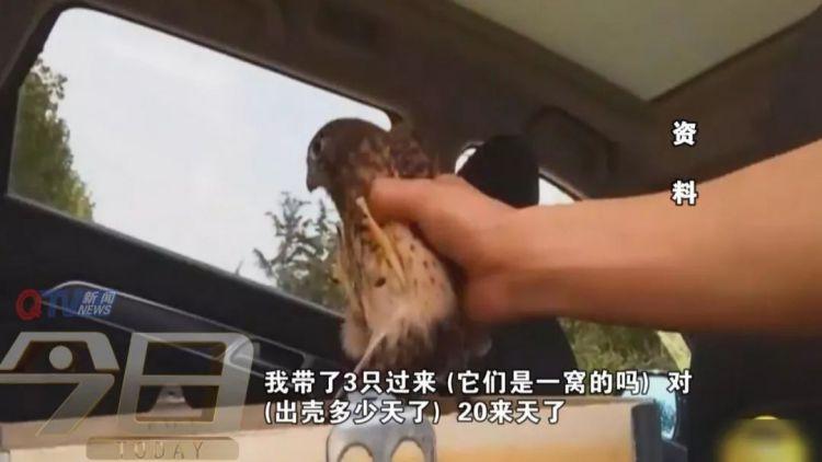 一点都不冤 胶州一男子抓了5只红隼 判1年罚两万