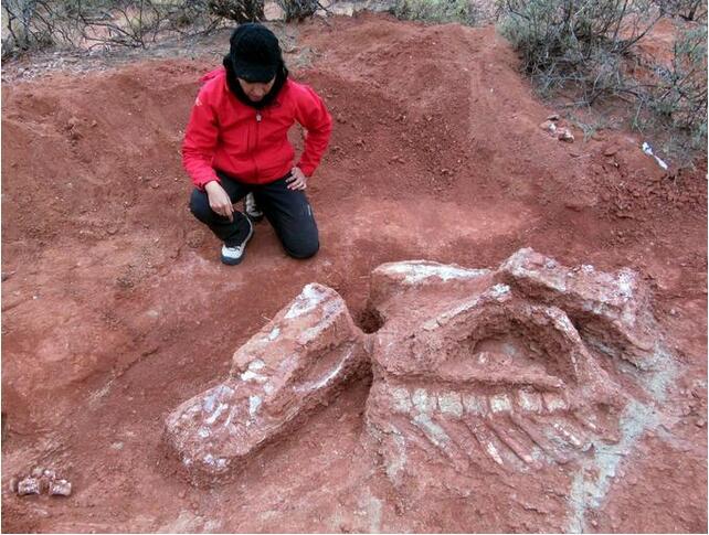 阿根廷发现巨型恐龙遗骸:距今逾两亿年!