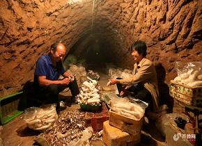 济南村民成立合作社 共同脱贫致富