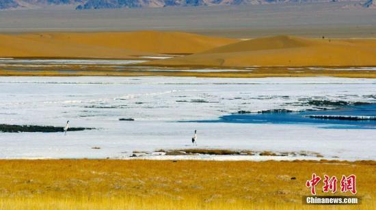 """新疆东南隅两自然保护区建立""""四联""""保护机制"""