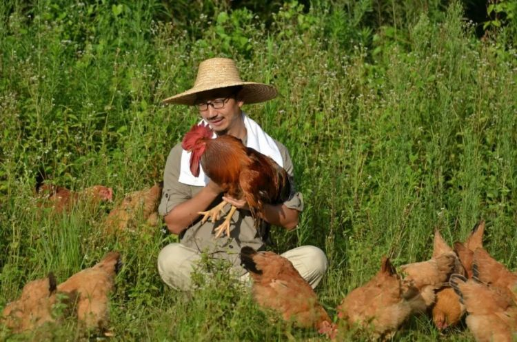 北大经济学毕业生广州养鸡!只是为了做这件事……