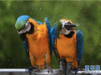 炎炎夏日 看动物们避暑有何妙招