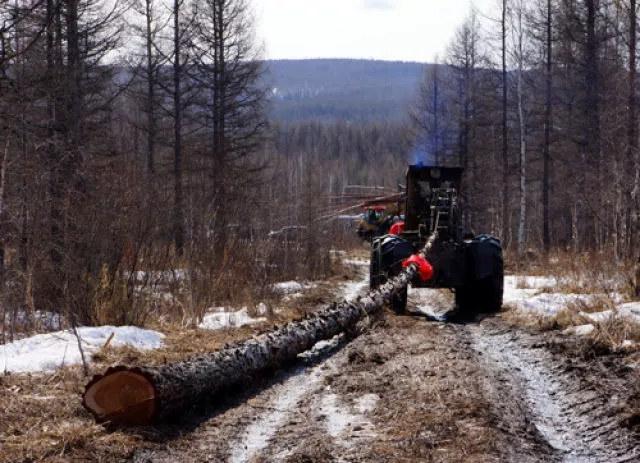 """森林后退四百里 ,耕地增加千万亩:大兴安岭""""绿屏风""""受损复原难"""