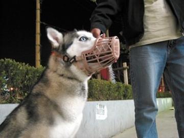 [转载]枣庄人要小心了!高温来袭 宠物也狂躁