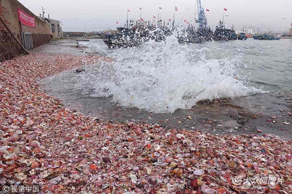 青岛逢天文大潮 大量贝壳被卷上码头