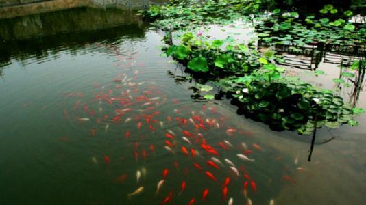 聊城:美丽乡村建设要求充分体现河湖田园风貌