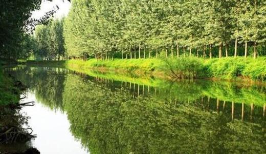 """聊城""""创森+""""发展模式助力林业经济提档升级"""