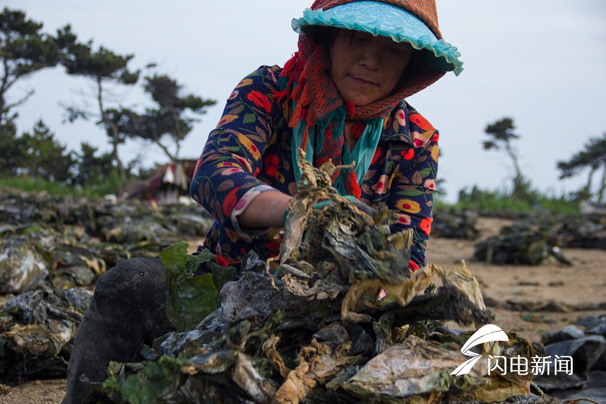 拾城记丨组图!大海产出的艺术美 晒海带成为独特风景线