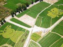 巧手农民创意多! 安徽稻田里种出小猪佩奇