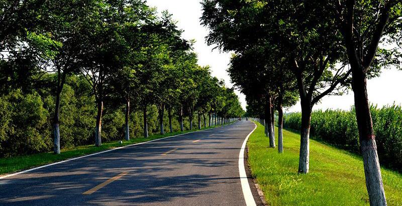 黄河森林公园:听曲下棋享清凉