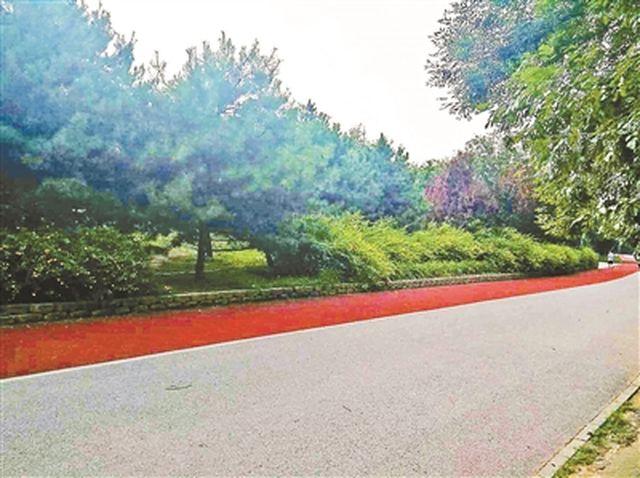 北京六旬老人公园内拍荷花 6万元摄影器材被抢走图片