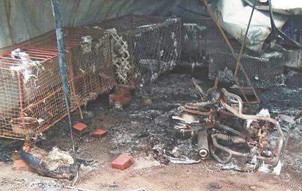 沂源一活禽店起火 设施烧毁无人伤亡