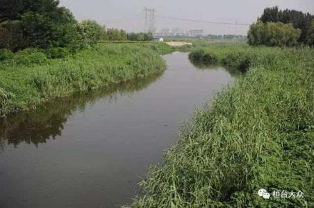 总投资8000万元 桓台乌河河道走廊人工湿地年底完工