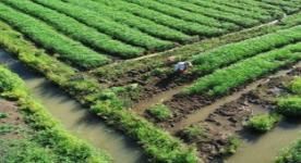 雨后蔬菜如何管理?淄博农业部门给你支招!