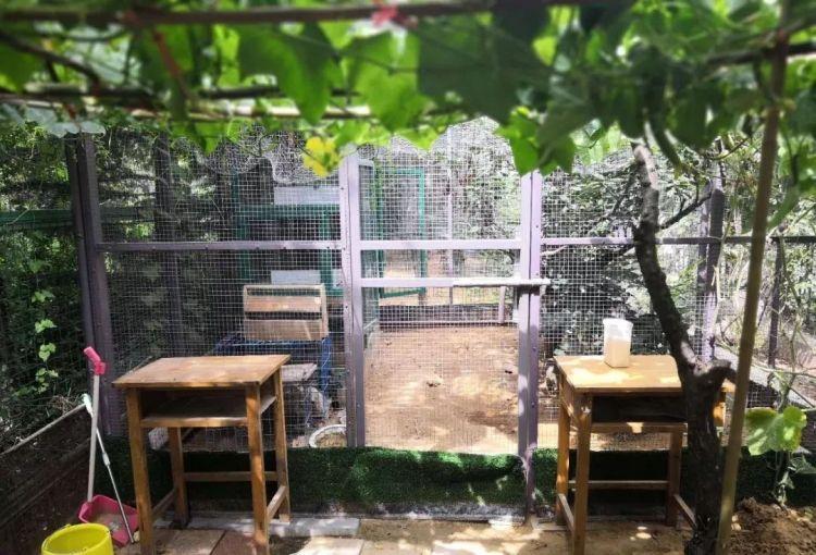 潍坊一小区部分业主占公共绿地养鸡养鸭建凉亭