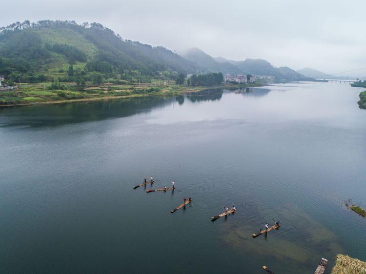 8月1日,淳安县汾口镇红星村的渔民乘着竹排,在千岛湖的支流武强溪上