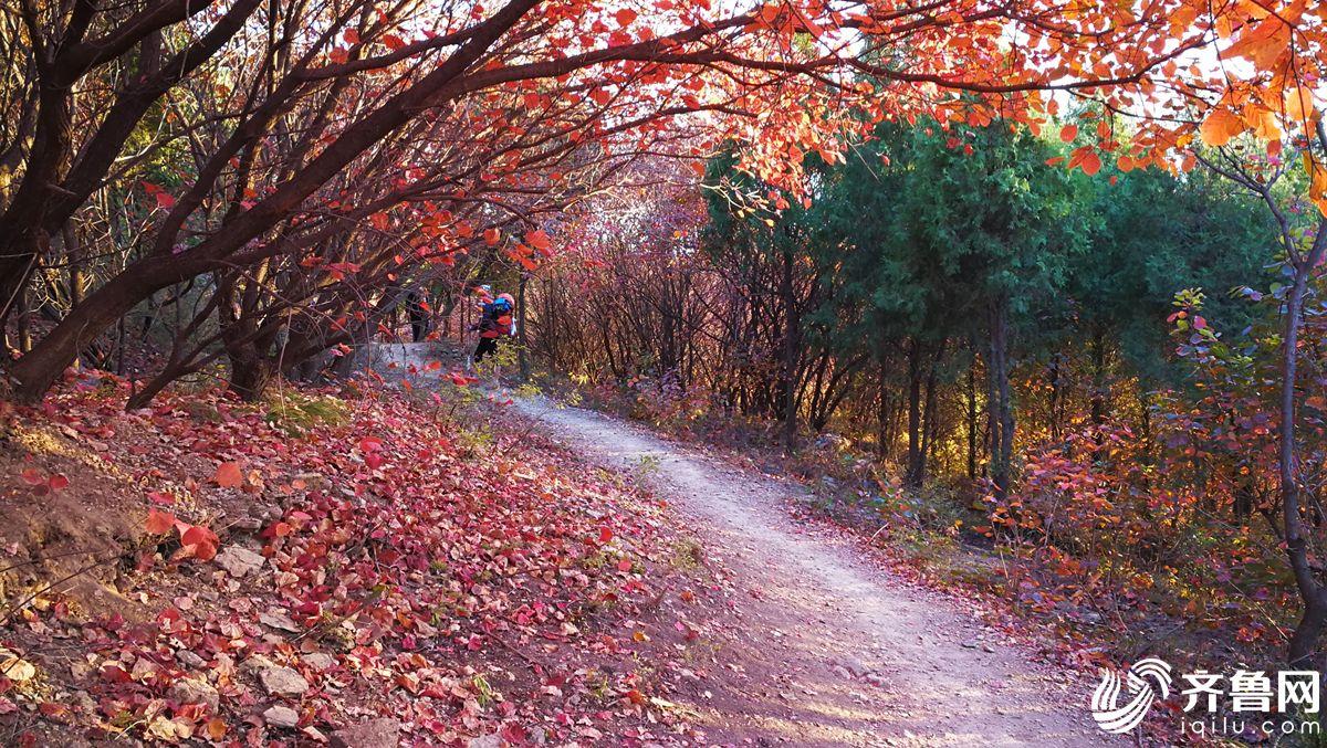 济南摄影师记录山间小路四季,四季轮换,四种颜色,四种风景.