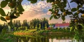 淄博市42个村镇列入省名单 3个美丽宜居小镇