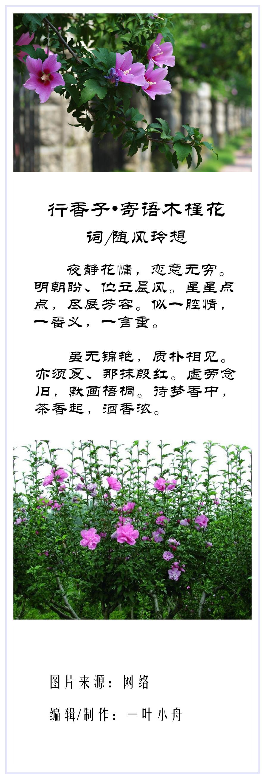 行香子•寄语木槿花诗合成