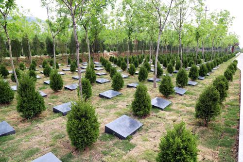到2018年底 聊城每个乡镇至少建成2-3处公益性公墓