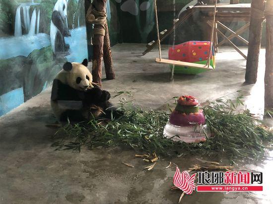 """临沂动植物园举办首届熊猫节 市民为""""团子""""过生日"""