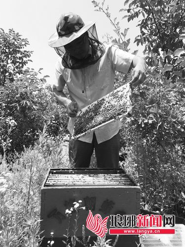 小蜜蜂撬动大产业 临沂蜂蜜年产量位居全山东第一