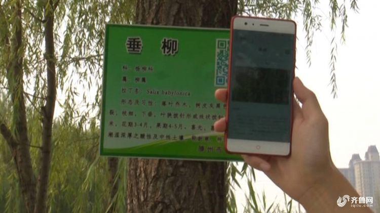 树木002.JPG