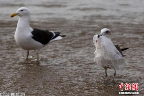 减少污染!新西兰明年将全面禁用一次性塑料袋