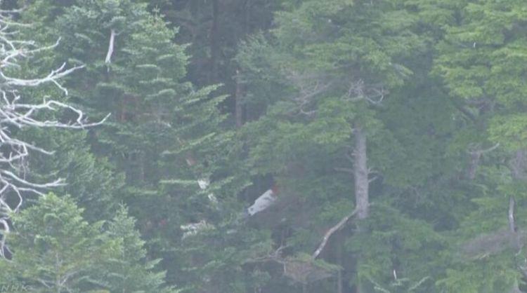 日本长野县境内发现飞机碎片 警方正确认是否为失联飞机