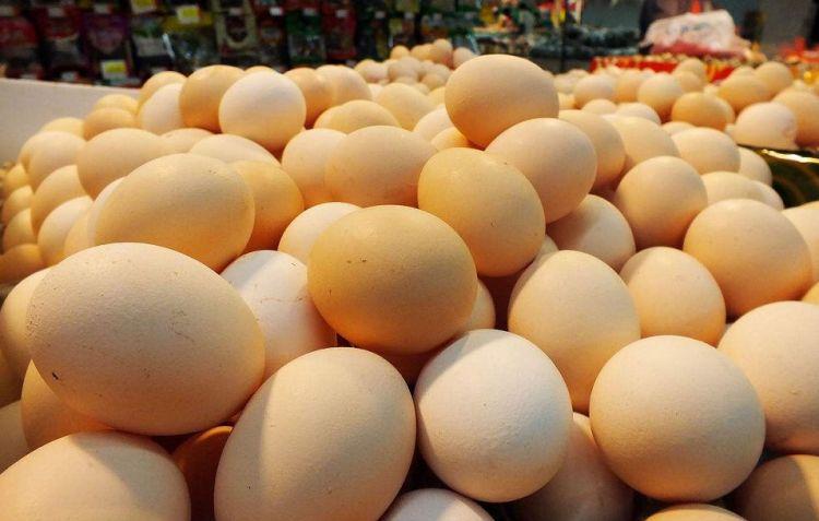 """山东:鸡蛋价格正式迈入""""5元时代"""""""