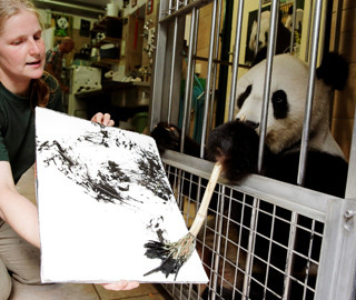 """奥天时植物园内 大熊猫""""挥毫作画"""""""