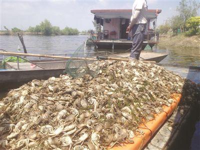 万亩鱼蟹死绝湖水变黑变臭 ?附近群众出现恶心头疼现象